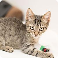 Adopt A Pet :: Luke - Fountain Hills, AZ