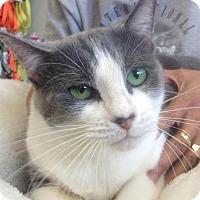 Adopt A Pet :: Kia - New York, NY