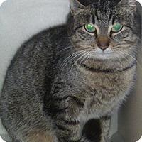 Adopt A Pet :: Frac - Hamburg, NY