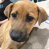 Adopt A Pet :: Adrian - Blue Bell, PA