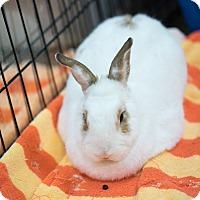 Adopt A Pet :: Moema - Montclair, CA