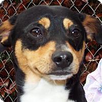 Adopt A Pet :: Joey - Grants Pass, OR