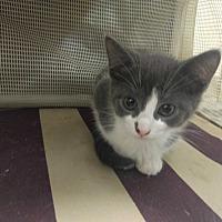 Adopt A Pet :: Maryann - La puente, CA