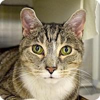 Adopt A Pet :: Chance - Baltimore, MD