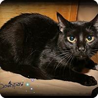 Adopt A Pet :: Southpaw - Shippenville, PA