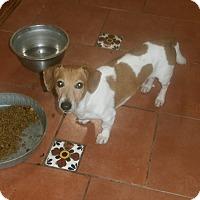 Adopt A Pet :: Huckelberry - San Diego, CA