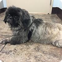 Adopt A Pet :: Mr. Winnie - Richmond, VA