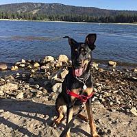 Adopt A Pet :: Ava - Orange, CA