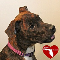 Adopt A Pet :: Lila - Walnut Creek, CA