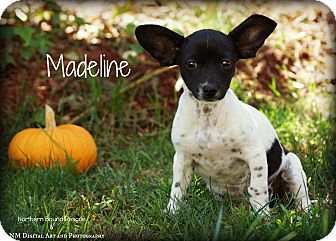 Spaniel (Unknown Type) Mix Puppy for adoption in Southington, Connecticut - Madeline
