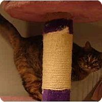 Adopt A Pet :: Marcie--PETSMART - Muncie, IN