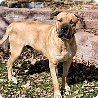 Adopt A Pet :: Mello Yellow - Lakewood, CO