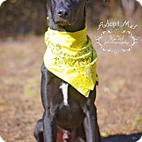Adopt A Pet :: Mowgli - Fort Valley, GA
