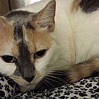 Adopt A Pet :: Victoria - Chesapeake, VA