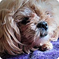 Adopt A Pet :: Smouchie - Santa Barbara, CA