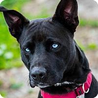 Adopt A Pet :: Star - Loxahatchee, FL