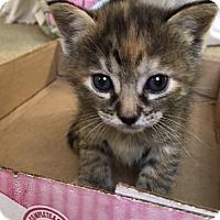 Adopt A Pet :: Hazel - Garland, TX