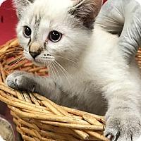 Adopt A Pet :: Sprinkles - Decatur, AL