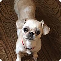 Adopt A Pet :: Belle - Atlanta, GA
