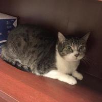 Adopt A Pet :: Boo - Sedona, AZ
