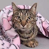 Adopt A Pet :: Lily - Wilmington, DE