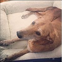 Adopt A Pet :: Mitzi - Los Angeles, CA