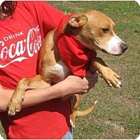 Pointer/Coonhound Mix Dog for adoption in Snellville, Georgia - Chuck