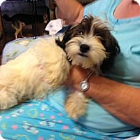 Adopt A Pet :: Tab - Hazard, KY