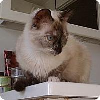 Adopt A Pet :: Gigi - Morgan Hill, CA