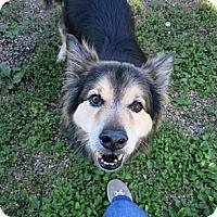 Adopt A Pet :: Samantha - Geneseo, IL