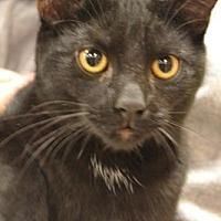Adopt A Pet :: Ylang Ylang - Toledo, OH