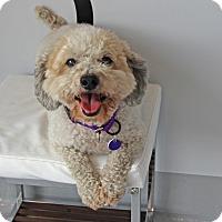 Adopt A Pet :: Elmer - Burbank, CA