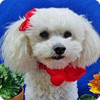 Adopt A Pet :: Tiffi - Irvine, CA