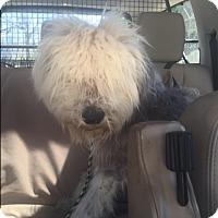 Adopt A Pet :: Braxton - Woonsocket, RI