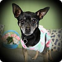 Adopt A Pet :: HARRIET (video) - Los Angeles, CA