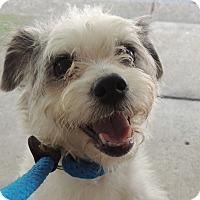 Adopt A Pet :: Vetta - Allentown, PA