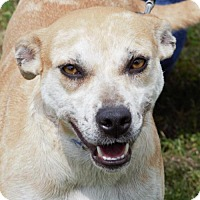Adopt A Pet :: Bell - Abbeville, LA