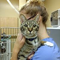 Adopt A Pet :: Gwen - Armuchee, GA