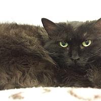 Adopt A Pet :: Queen Camilla - Walden, NY