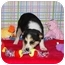 Photo 1 - Australian Cattle Dog/Cattle Dog Mix Puppy for adoption in Broomfield, Colorado - Diane Keaton