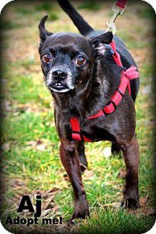 Chihuahua/Pug Mix Dog for adoption in mishawaka, Indiana - AJ