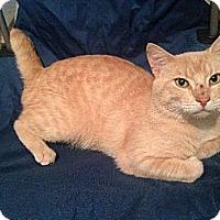 Adopt A Pet :: Tom - Miami, FL