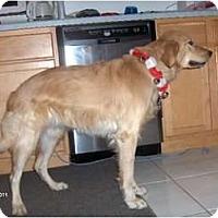 Adopt A Pet :: Lunalu - Clayton, OH