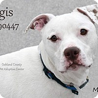 Adopt A Pet :: Regis - Troy, MI