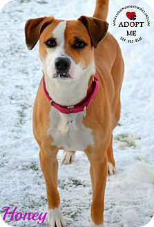 Terrier (Unknown Type, Medium) Mix Dog for adoption in Youngwood, Pennsylvania - Honey