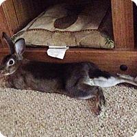 Adopt A Pet :: Dandy - Williston, FL