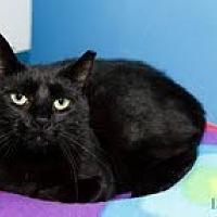 Adopt A Pet :: Nora - Marlboro, NJ