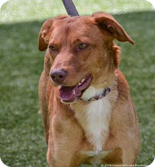 Shepherd (Unknown Type) Mix Dog for adoption in Parma, Ohio - Centra