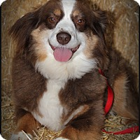 Adopt A Pet :: Willy - Bellingham, WA
