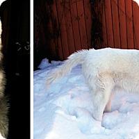 Adopt A Pet :: NAKAI - Boyertown, PA